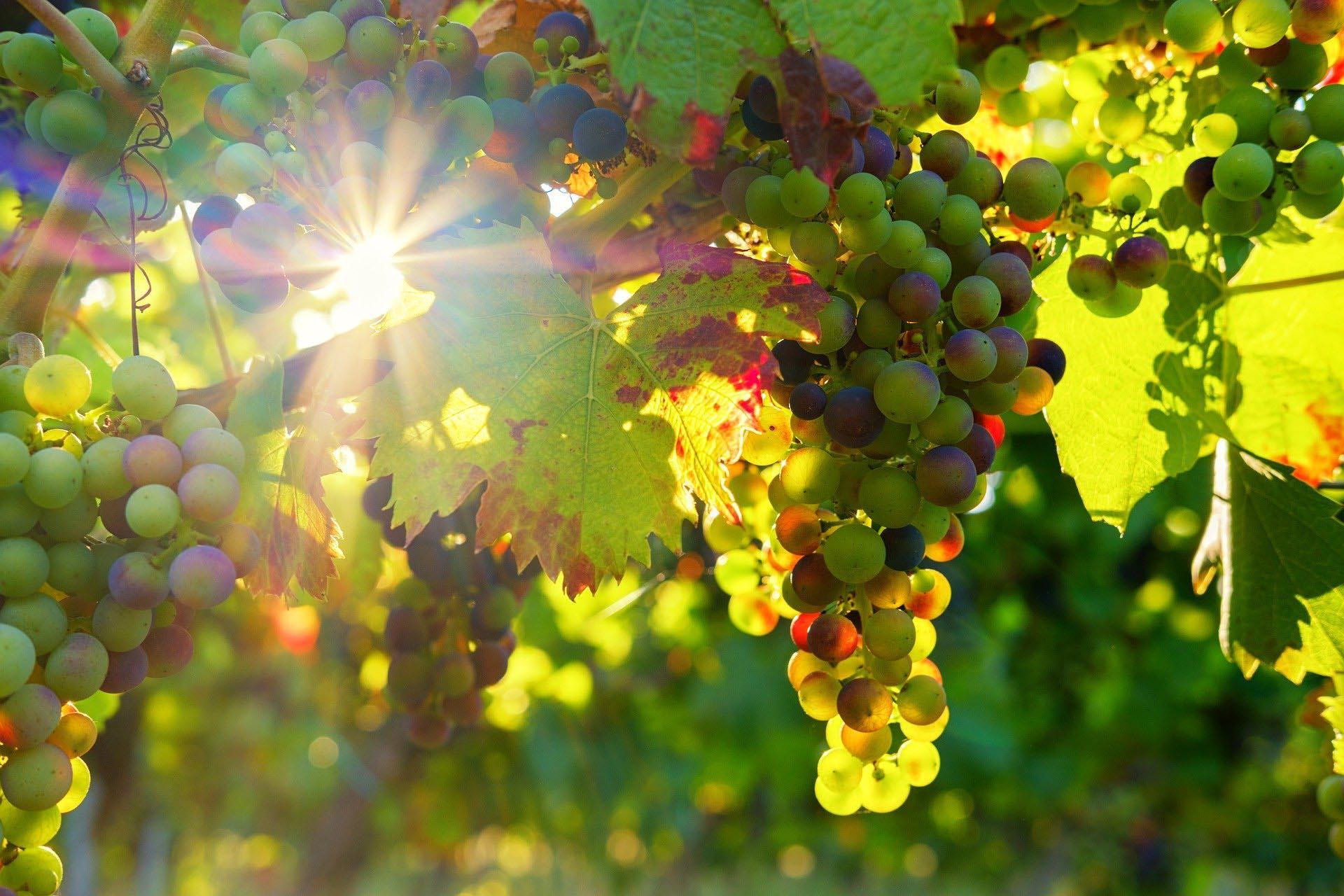 Vins bio, vins en biodynamie et vins natures : tout ce qu'il faut savoir