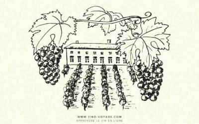 Le cycle annuel de la vigne