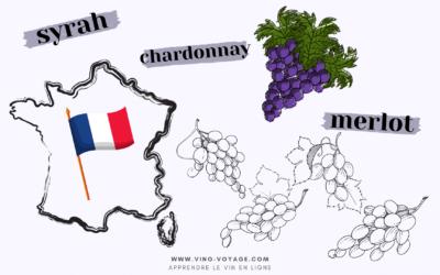 Top 10 des cépages les plus plantés en France