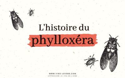 La crise du phylloxéra : l'insecte qui a ravagé les vignes au 19ème siècle